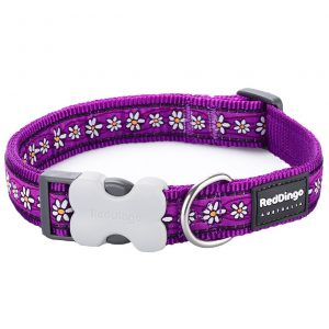 red-dingo-daisy-chain-dog-collar