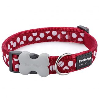 red-dingo-white-spot-on-red-dog-collar