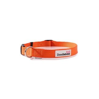 doodlebone-orange-dog-collar