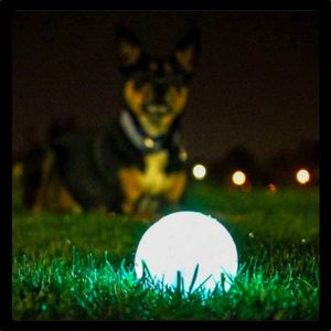 chuckit-max-glow-erratic-ball-2
