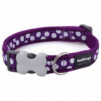 red-dingo-white-spots-on-purple-dog-collar