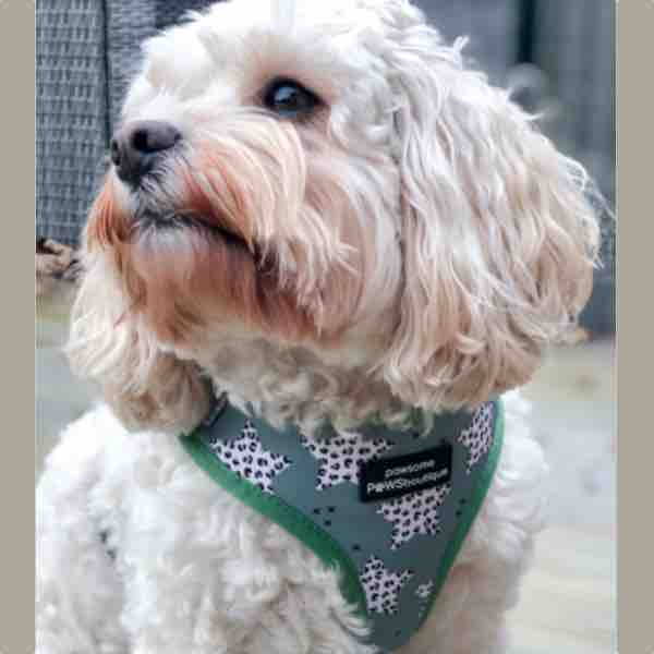 pawsome-paws-stars-in-your-eyes-harness